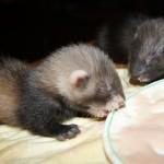 девочка 3  и мальчик кушаем